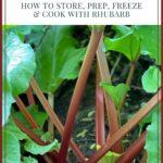 harvesting and preparing rhubarb pin