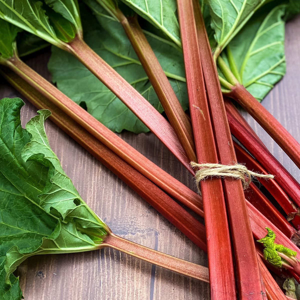 rhubarb on table with twine