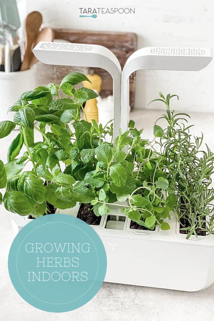Growing Indoor Herbs
