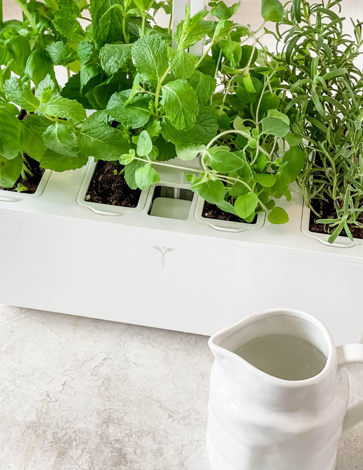 using a Veritable Garden herb grower