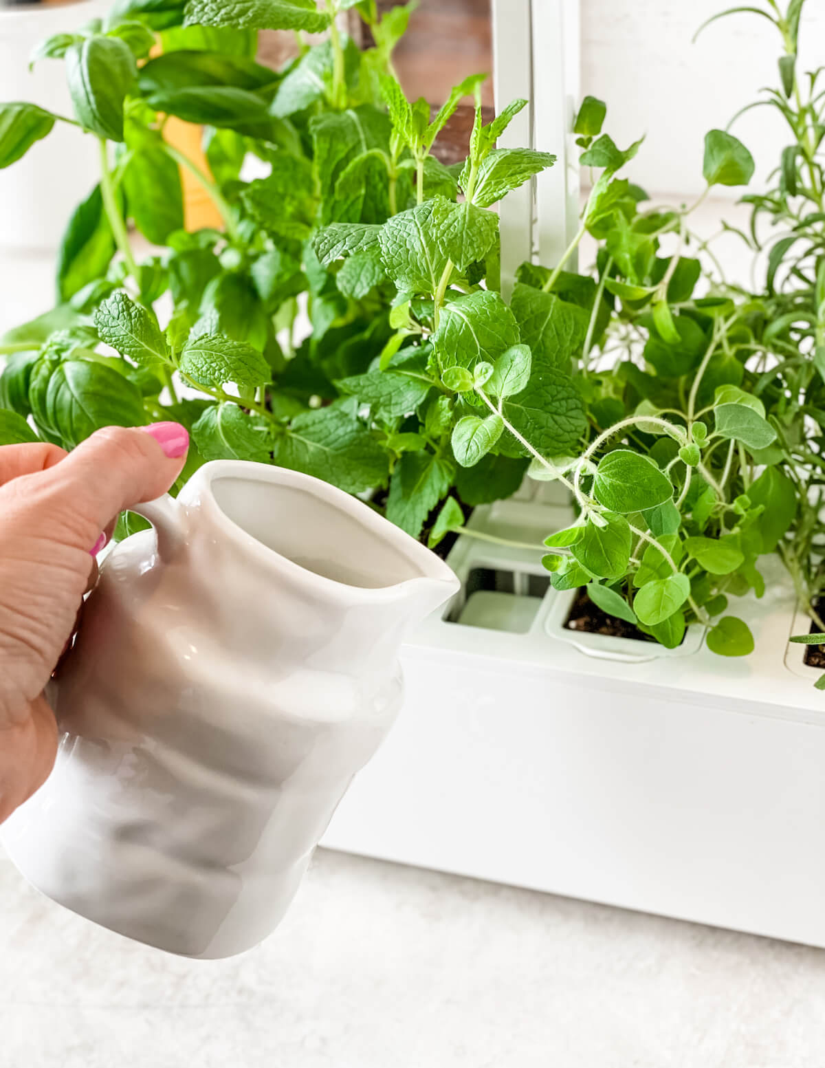 filling the Veritable herb garden with water