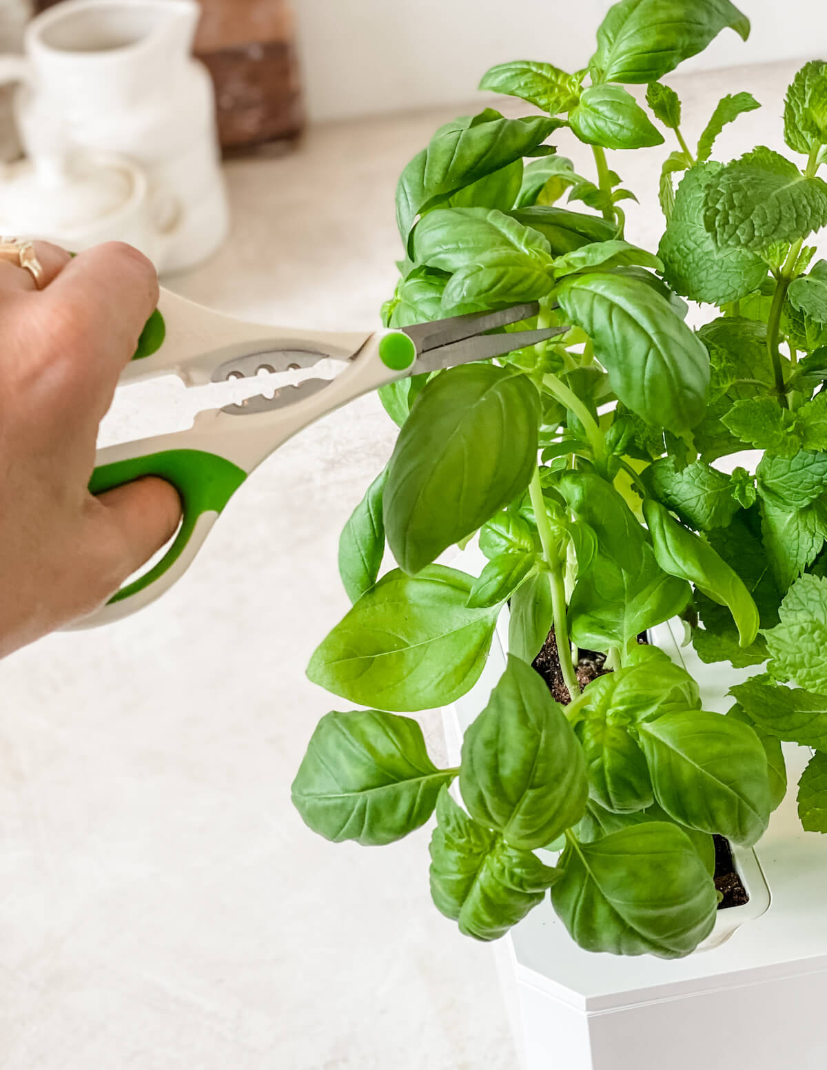 cutting fresh herbs for use