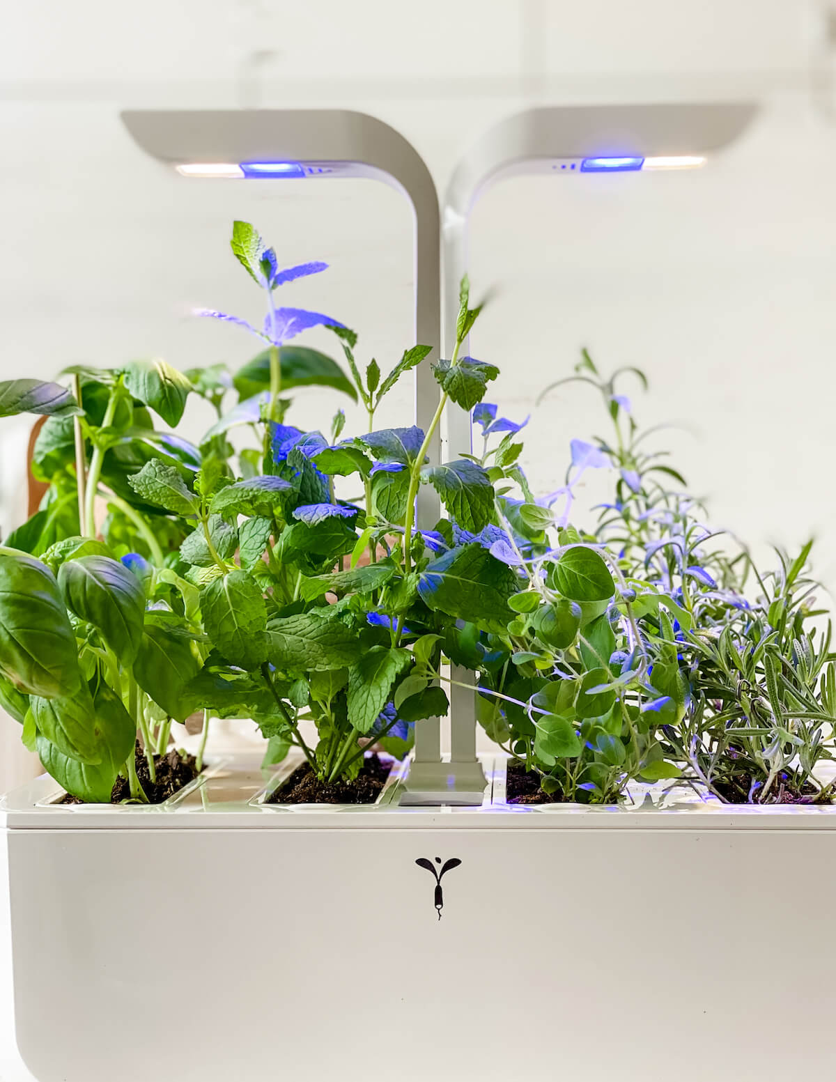 Veritable Herb garden with lights on