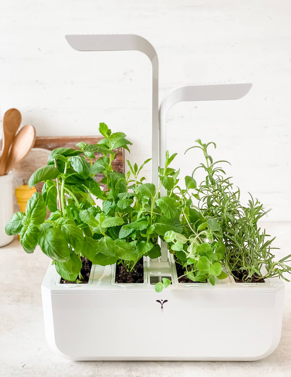 growing herbs indoors with lights