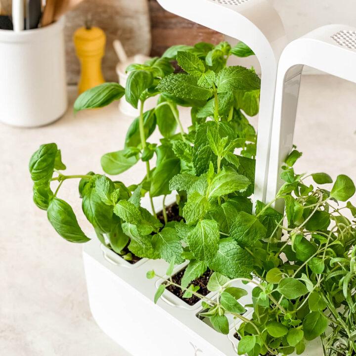 close up on indoor herb garden machine